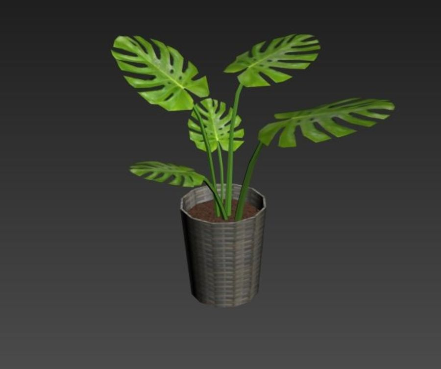 Monstera Deliciosa royalty-free 3d model - Preview no. 4
