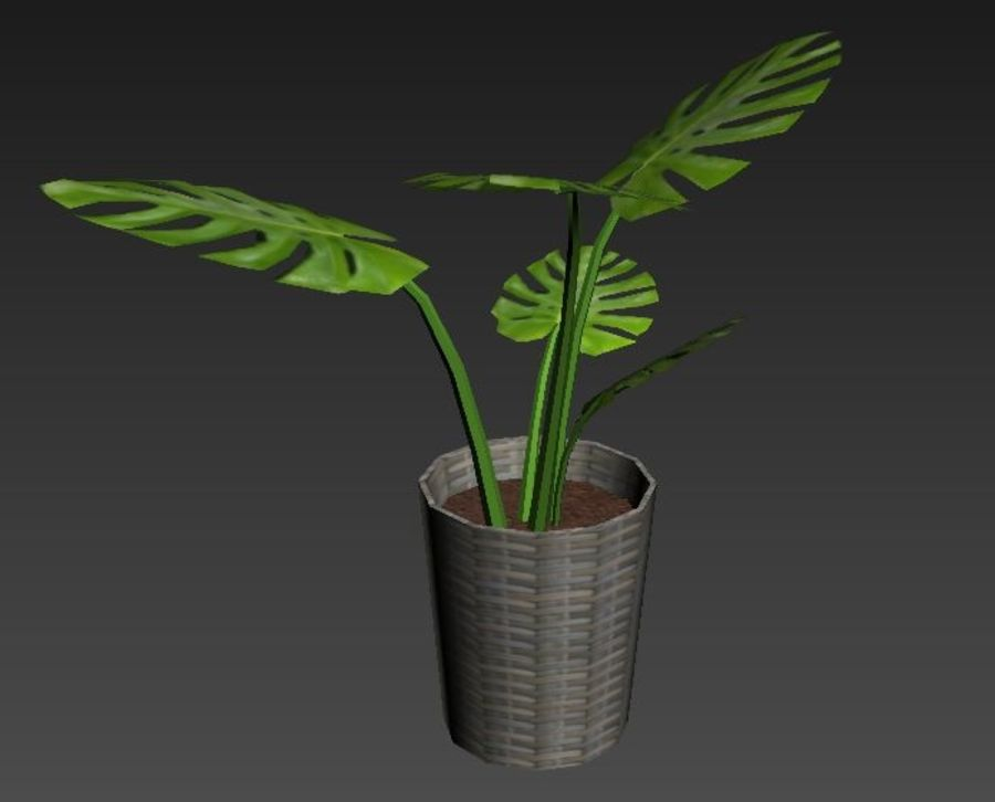 Monstera Deliciosa royalty-free 3d model - Preview no. 5