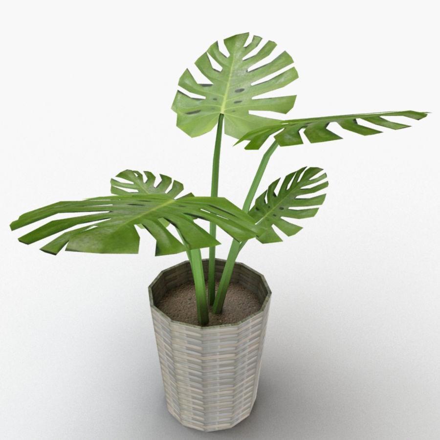 Monstera Deliciosa royalty-free 3d model - Preview no. 2