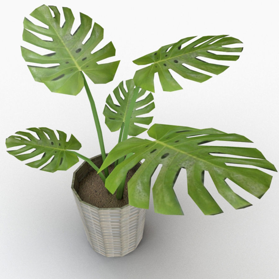 Monstera Deliciosa royalty-free 3d model - Preview no. 1