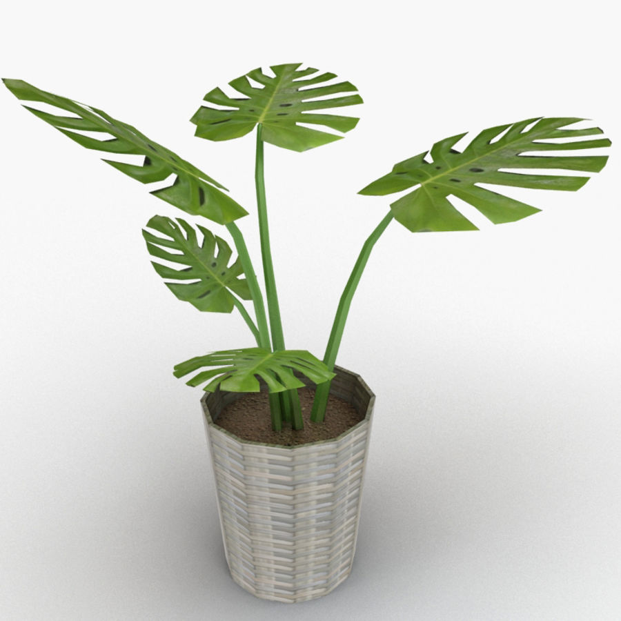 Monstera Deliciosa royalty-free 3d model - Preview no. 3