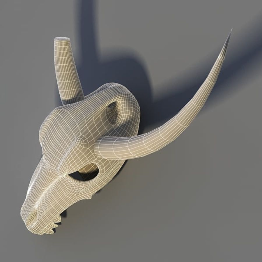 Animal Skull royalty-free 3d model - Preview no. 9