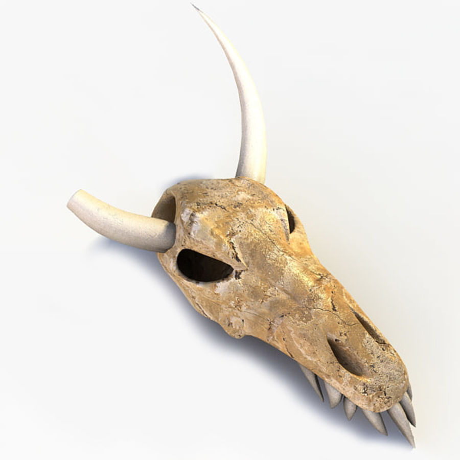 Animal Skull royalty-free 3d model - Preview no. 1