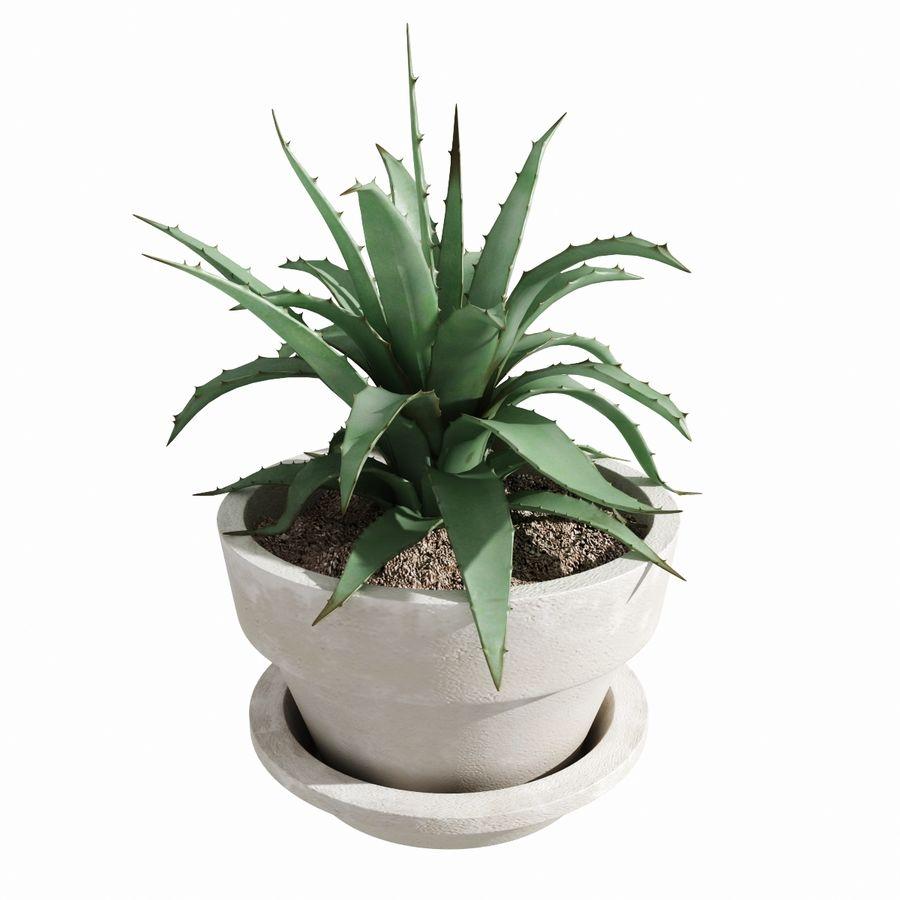 Aloe Agave Century Plant 3D Model $25 -  obj  fbx  max  3ds - Free3D