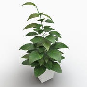 Golden Pole Pothos 3d model