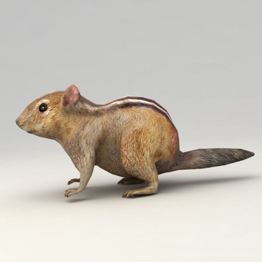 Chipmunk lowpoly model royalty-free 3d model - Preview no. 4