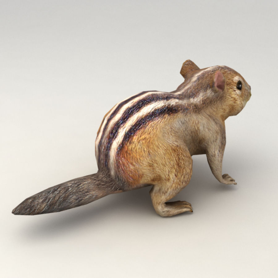 Chipmunk lowpoly model royalty-free 3d model - Preview no. 3