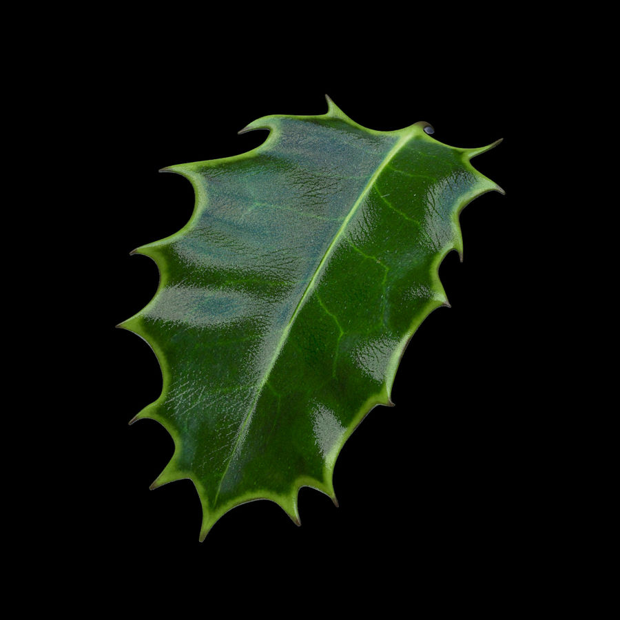 Holly Leaf B royalty-free 3d model - Preview no. 2