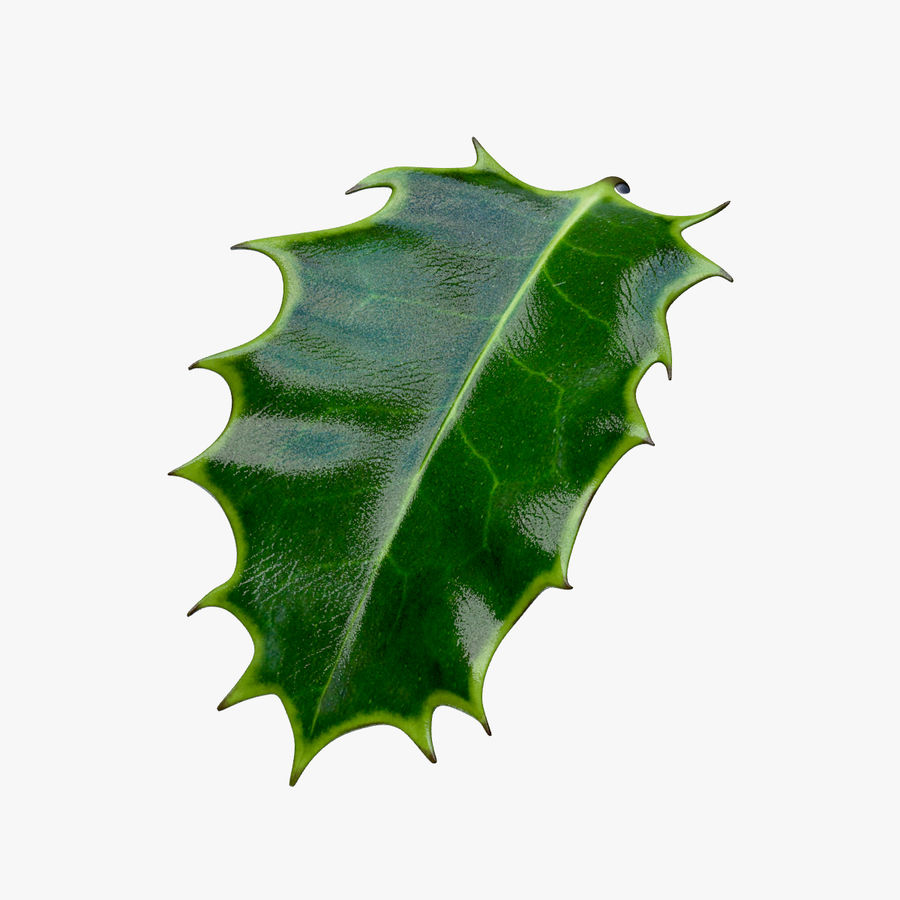 Holly Leaf B royalty-free 3d model - Preview no. 1