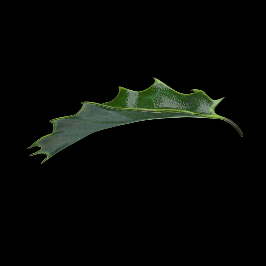 Holly Leaf B royalty-free 3d model - Preview no. 9
