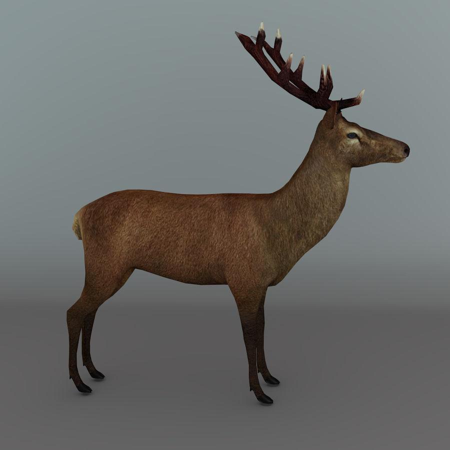 Red Deer Stag 3D Model $10 - .oth .3ds .fbx .blend .obj - Free3D