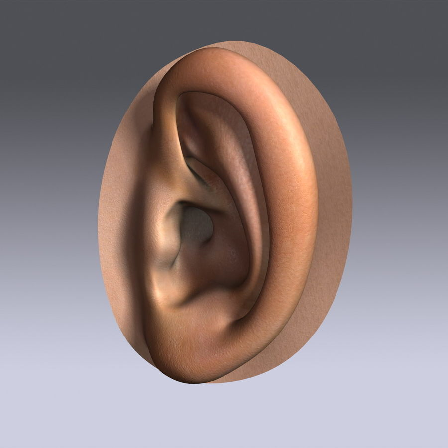 Human Ear royalty-free 3d model - Preview no. 4