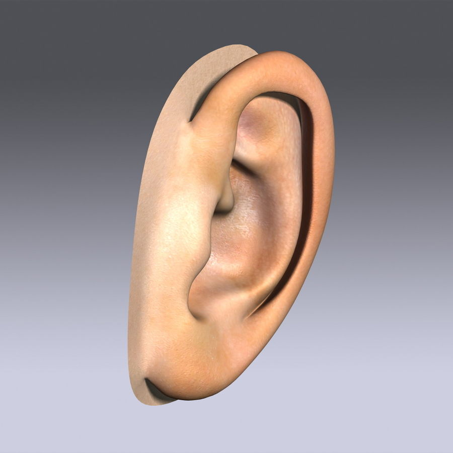 Human Ear royalty-free 3d model - Preview no. 3