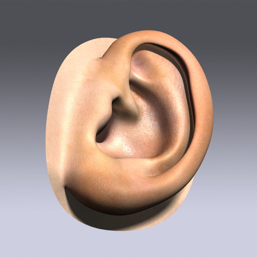 Human Ear royalty-free 3d model - Preview no. 6