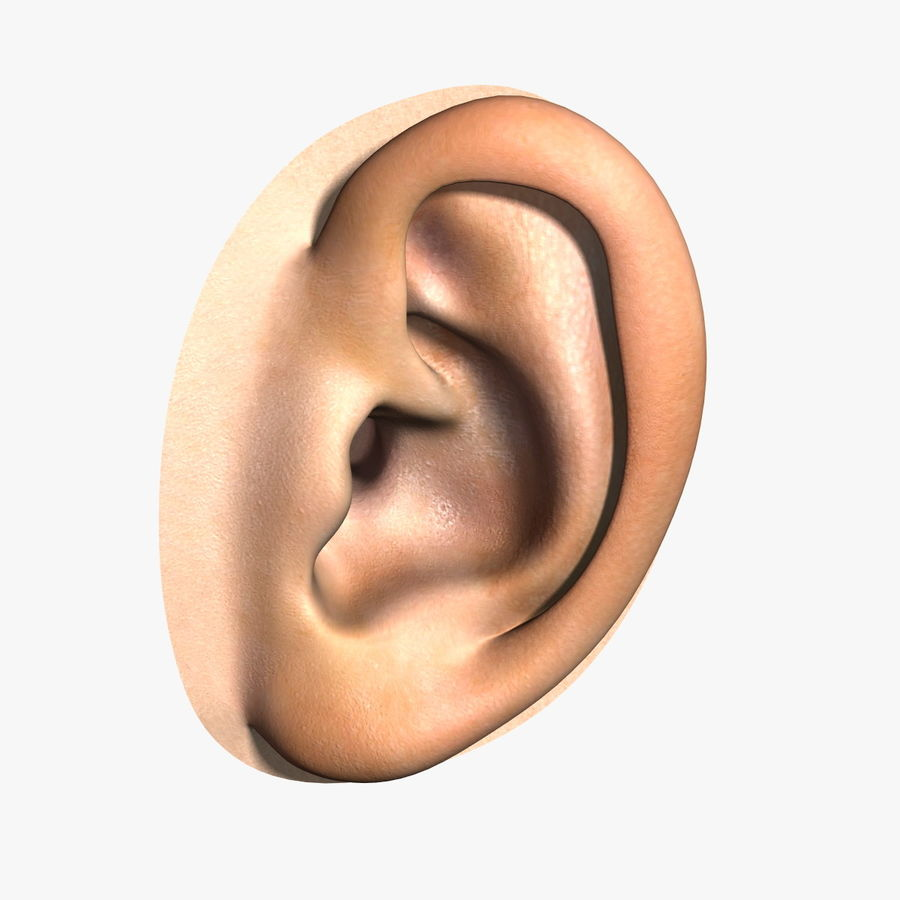 Human Ear royalty-free 3d model - Preview no. 1