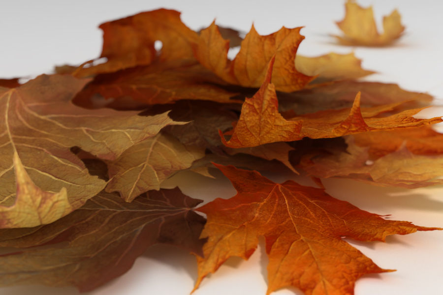 Autumn Leaves 3D Model $19 -  max - Free3D