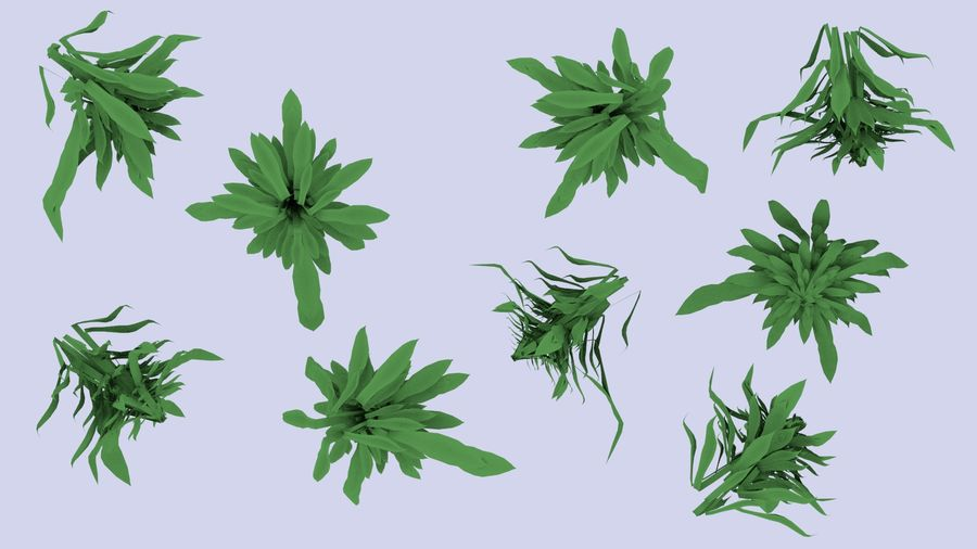 Plant royalty-free 3d model - Preview no. 9