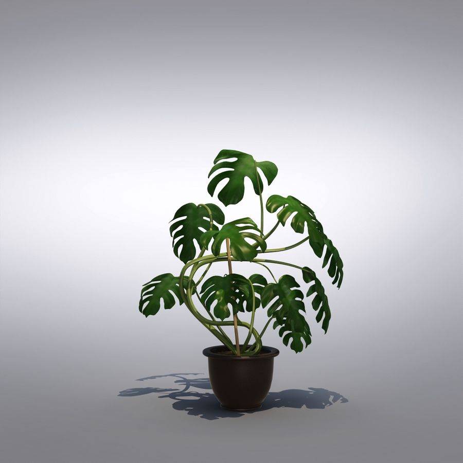 Philodendron Monstera Floor Plant royalty-free 3d model - Preview no. 3