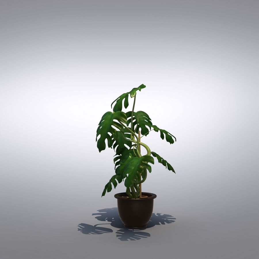Philodendron Monstera Floor Plant royalty-free 3d model - Preview no. 4
