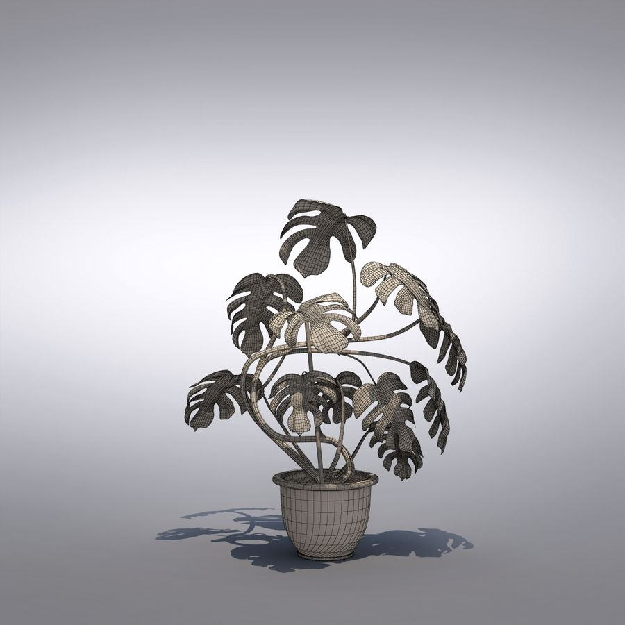 Philodendron Monstera Floor Plant royalty-free 3d model - Preview no. 2
