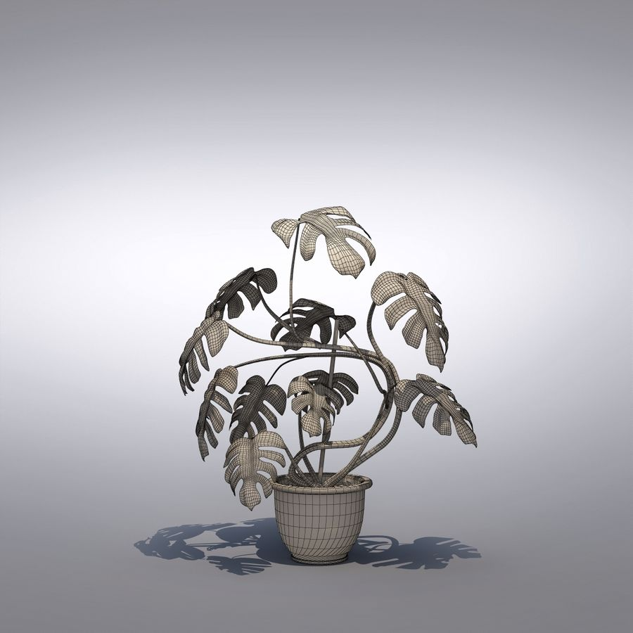 Philodendron Monstera Floor Plant royalty-free 3d model - Preview no. 7
