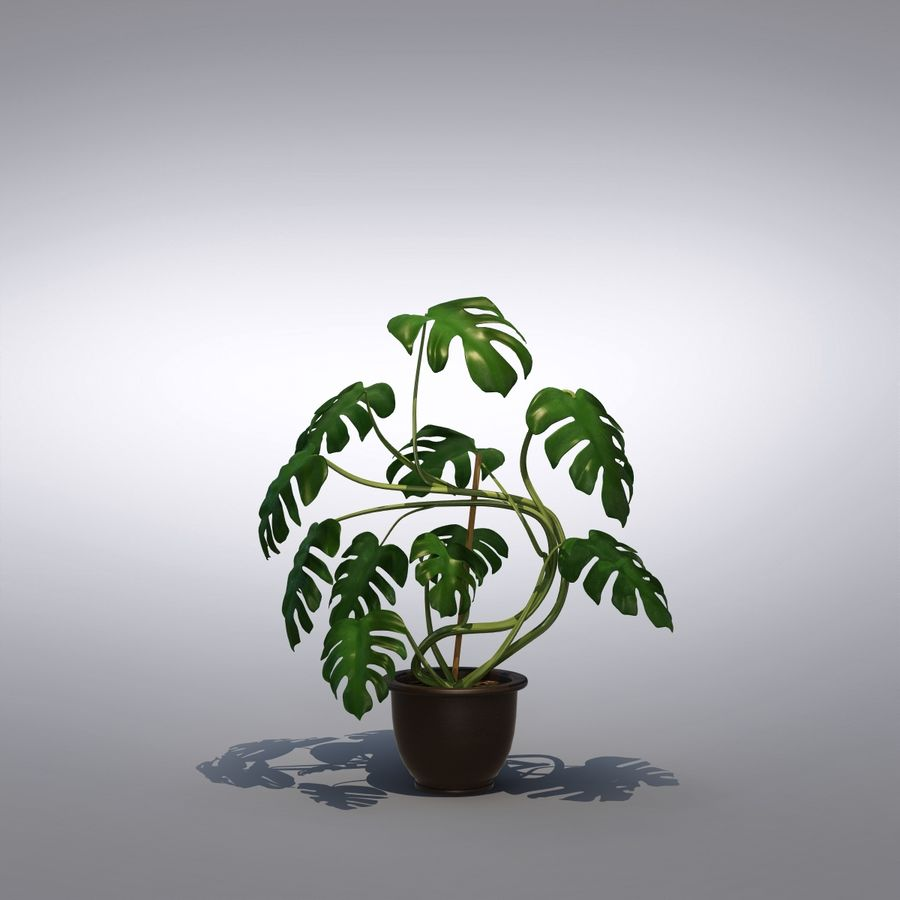 Philodendron Monstera Floor Plant royalty-free 3d model - Preview no. 1