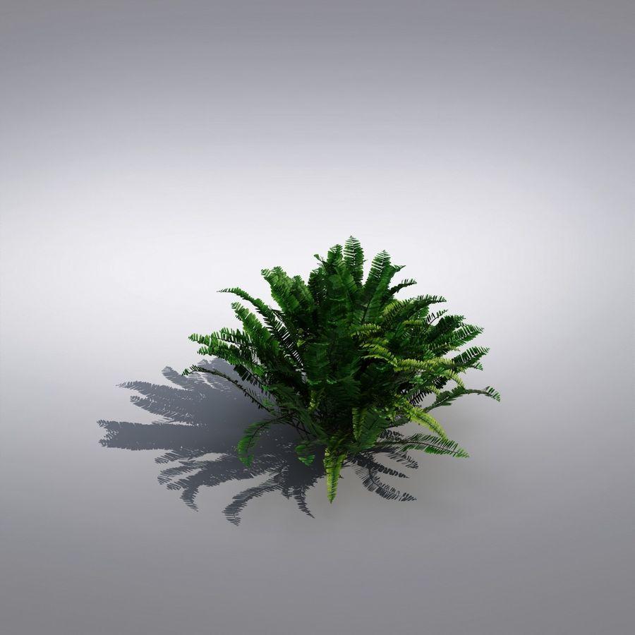 Bush Plant royalty-free 3d model - Preview no. 3