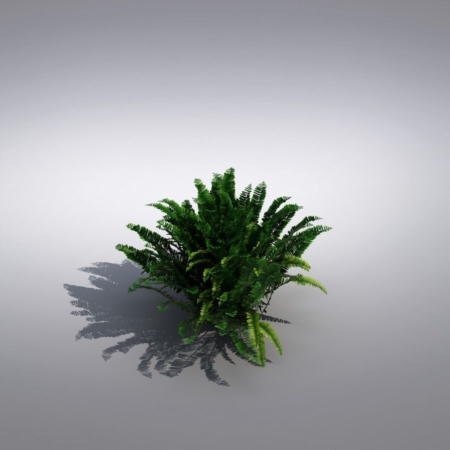 Bush Plant royalty-free 3d model - Preview no. 2