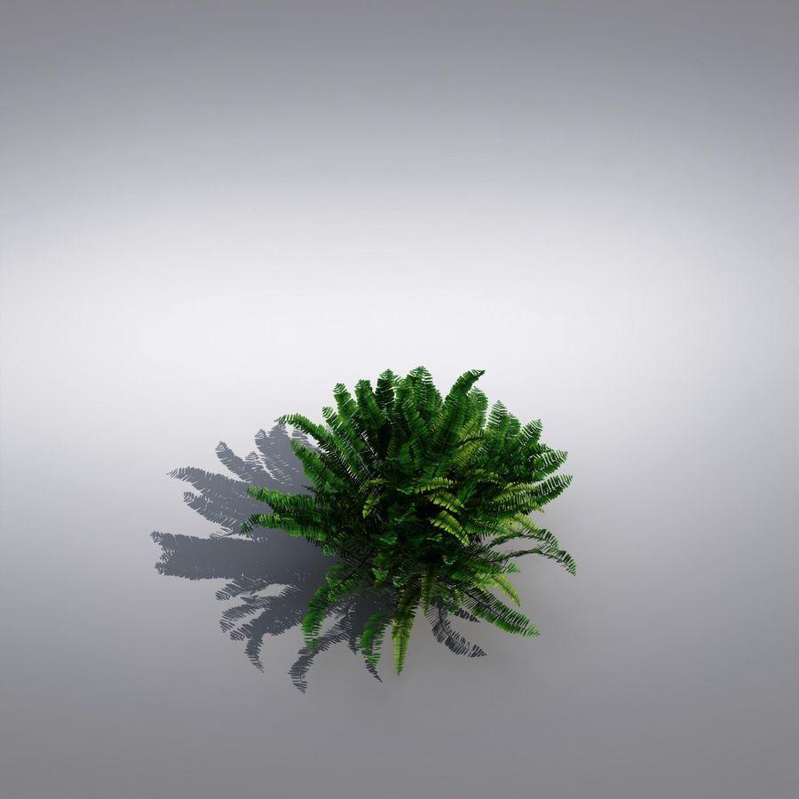 Bush Plant royalty-free 3d model - Preview no. 4