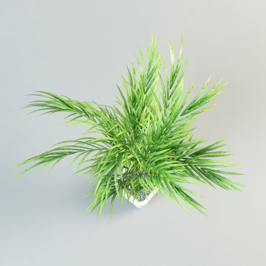 Palme im Topf royalty-free 3d model - Preview no. 4