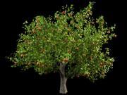 사과 사과 나무 crabapples 3d model