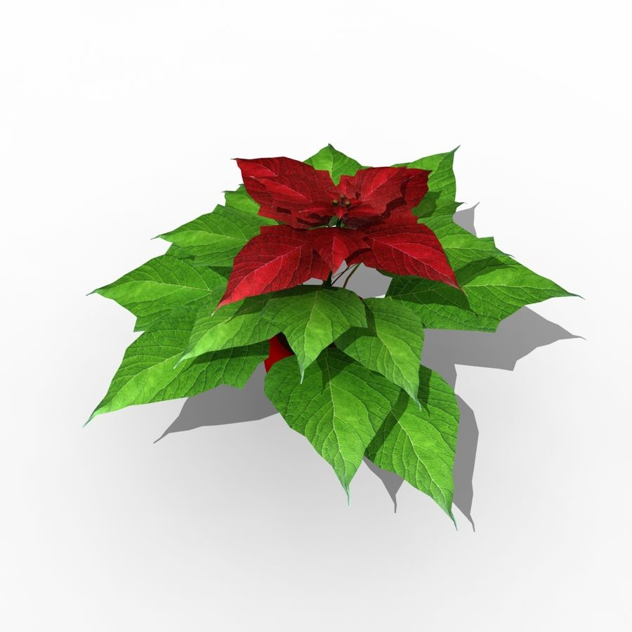 Poinsettia Christmas Star royalty-free 3d model - Preview no. 1