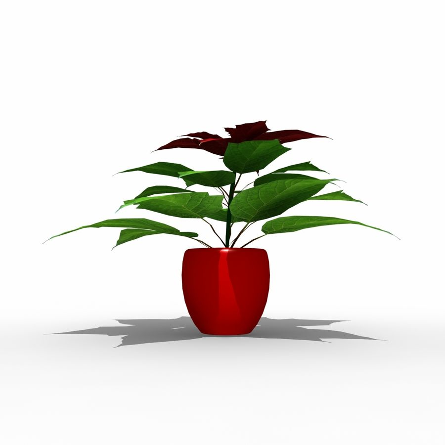 Poinsettia Christmas Star royalty-free 3d model - Preview no. 3