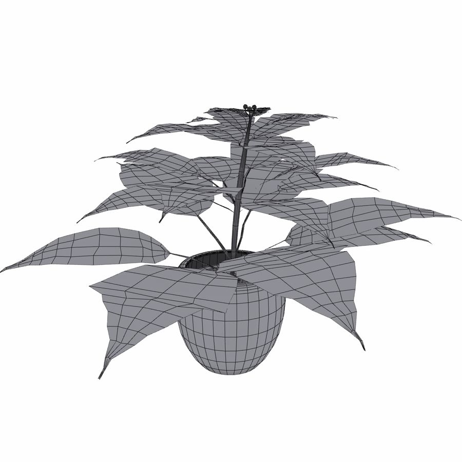 Poinsettia Christmas Star royalty-free 3d model - Preview no. 6