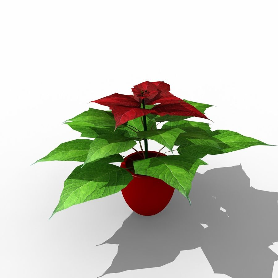 Poinsettia Christmas Star royalty-free 3d model - Preview no. 2