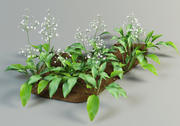 alisma plantago mad-dog weed 3d model