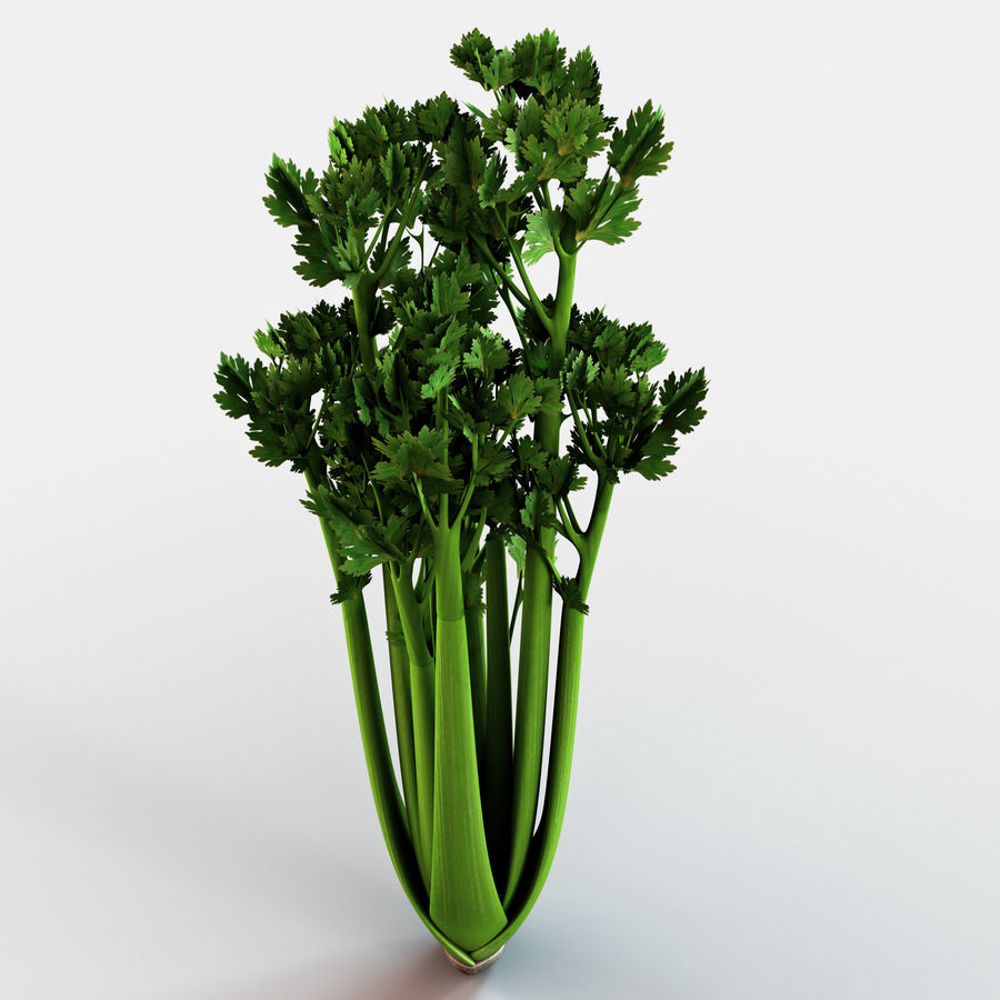 Celery royalty-free 3d model - Preview no. 4