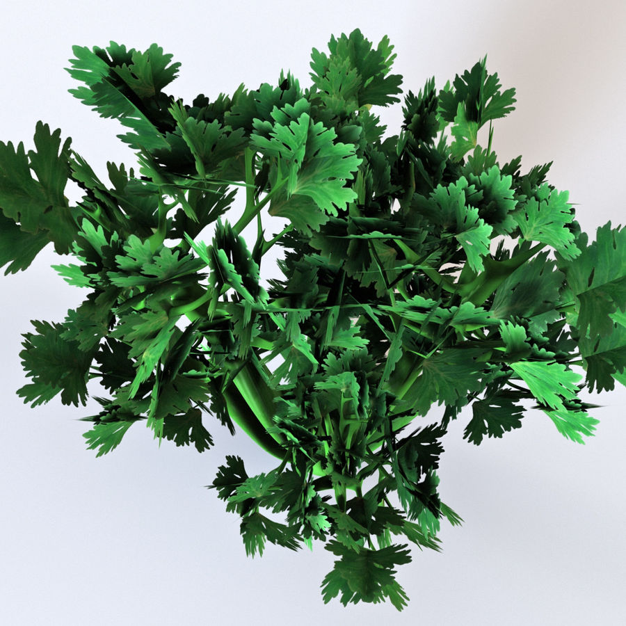 Celery royalty-free 3d model - Preview no. 7