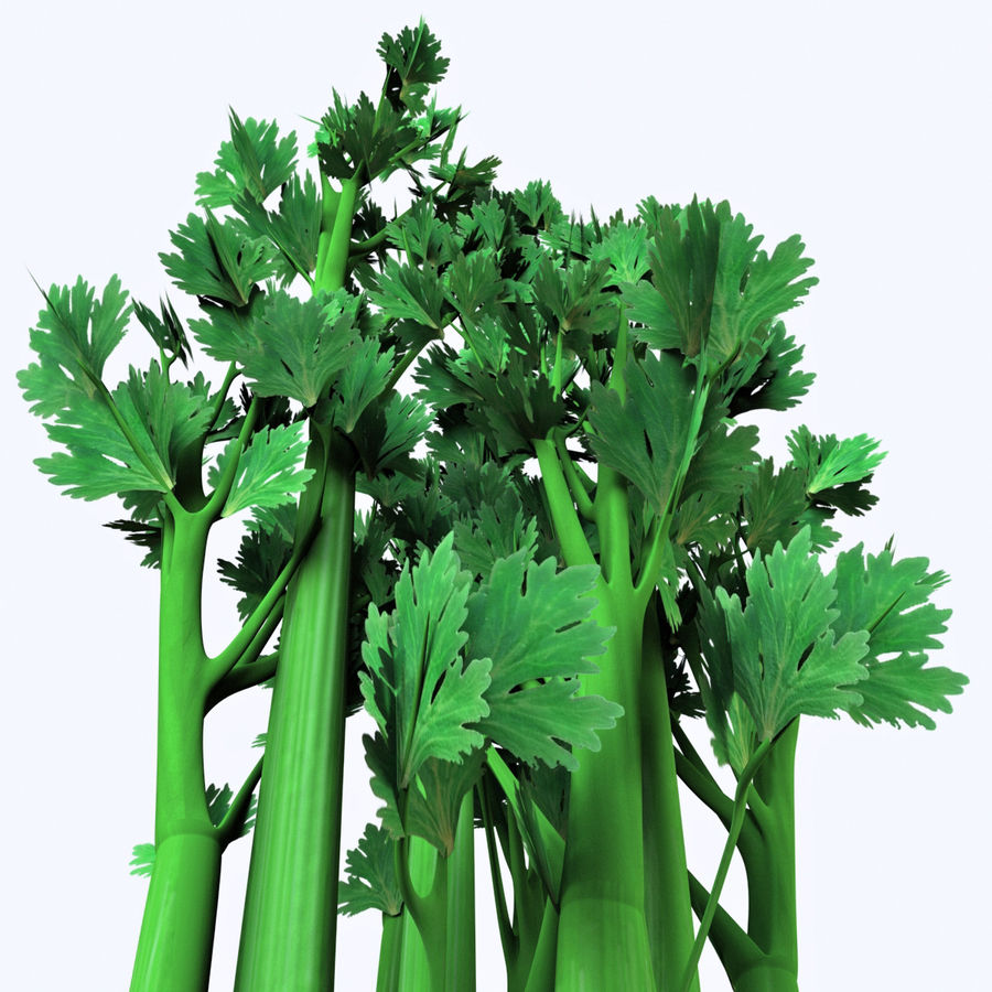 Celery royalty-free 3d model - Preview no. 12