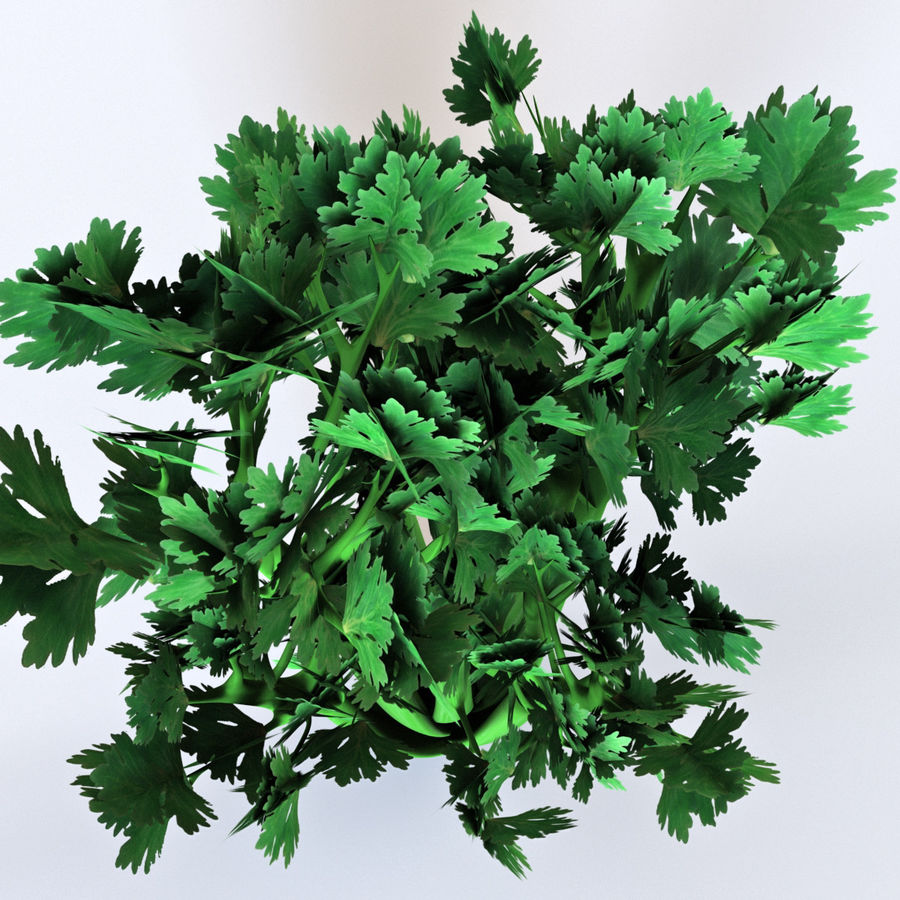 Celery royalty-free 3d model - Preview no. 6