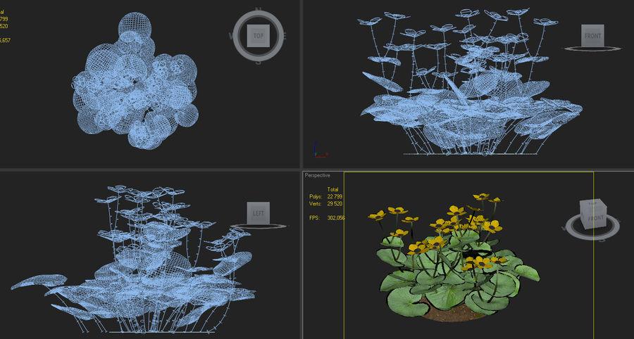 caltha palustris kingcup marsh marigold royalty-free 3d model - Preview no. 5