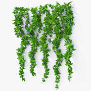 Wall Hanging Plant Ivy K model 3d model