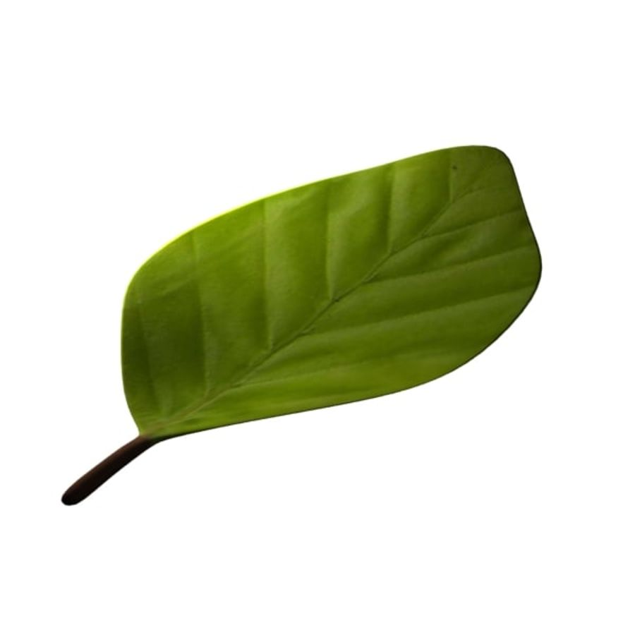Leaf 02 royalty-free 3d model - Preview no. 1