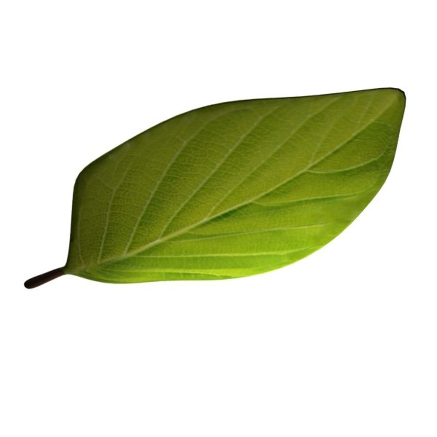 Leaf 02 royalty-free 3d model - Preview no. 3