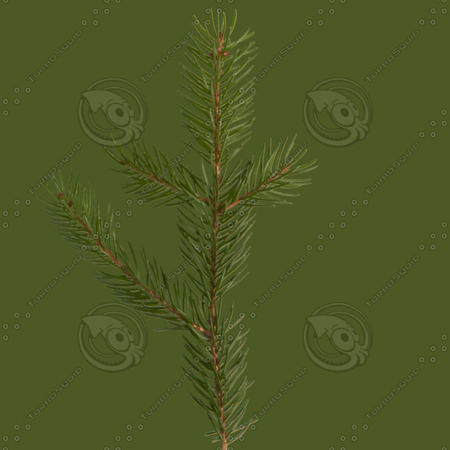 Christmas Tree M-01 royalty-free 3d model - Preview no. 12