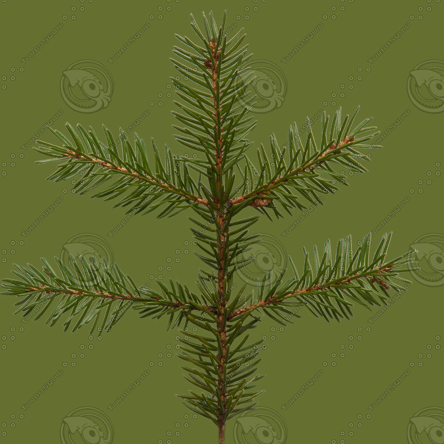 Christmas Tree M-01 royalty-free 3d model - Preview no. 8