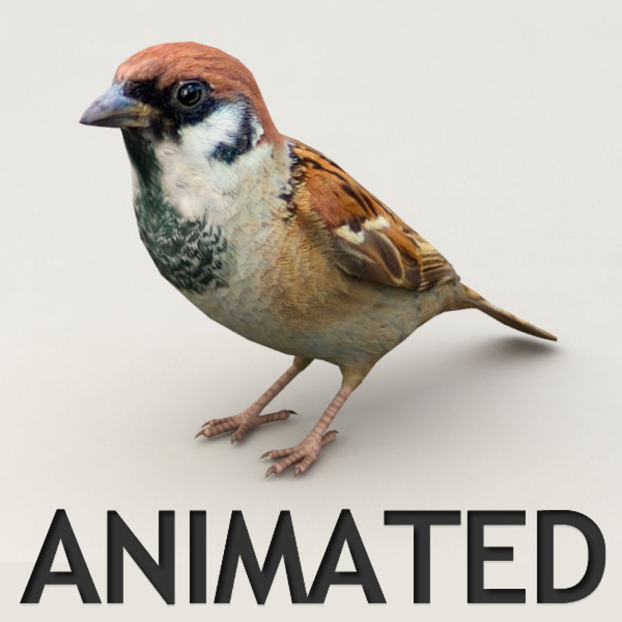 Sparrow Animated royalty-free 3d model - Preview no. 1