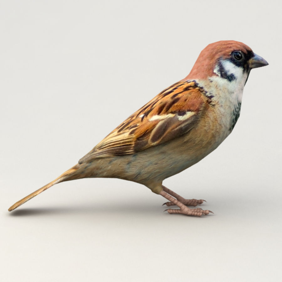 Sparrow Animated royalty-free 3d model - Preview no. 5