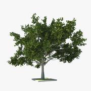 Árvore de folha caduca (carvalho) 3d model