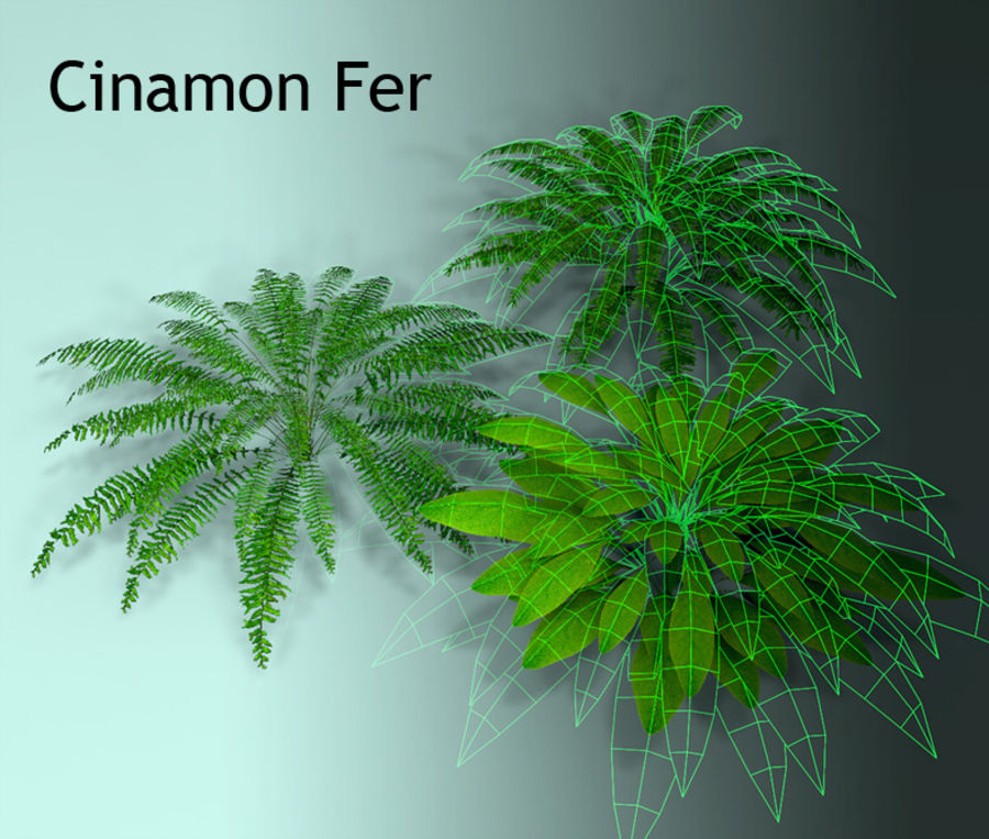 Plant Fer royalty-free 3d model - Preview no. 8